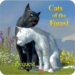 Cats of the Forest  APK Mod 1.1.1